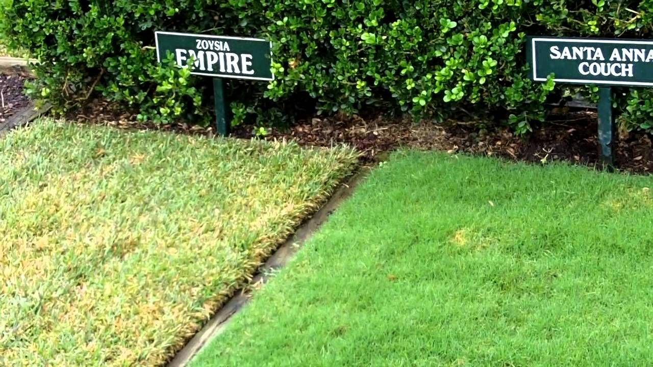Preference is more cooch type grass i think garden pinterest
