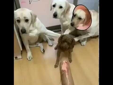 Four accused three betrayals traición trahison @ Bivalium Minix Cute