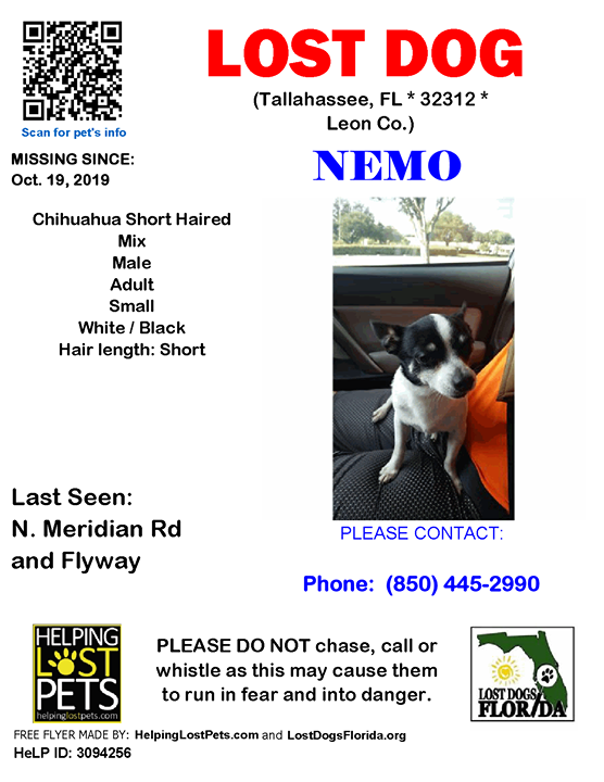 Nemo Is Lost Have You Seen Him Lostdog Nemo Tallahassee N Meridian Rd Flyway Fl 32312 Leon Co Dog 10 19 2019 Losing A Dog Losing A Pet Dogs