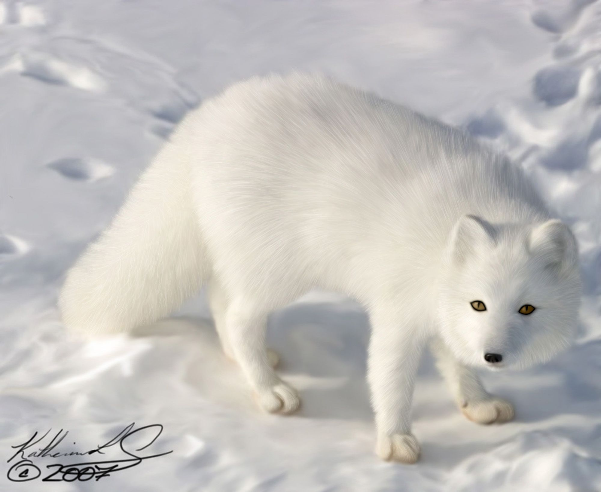 Arctic Fox Yeah, it's not a baby fox but to me foxes are ...