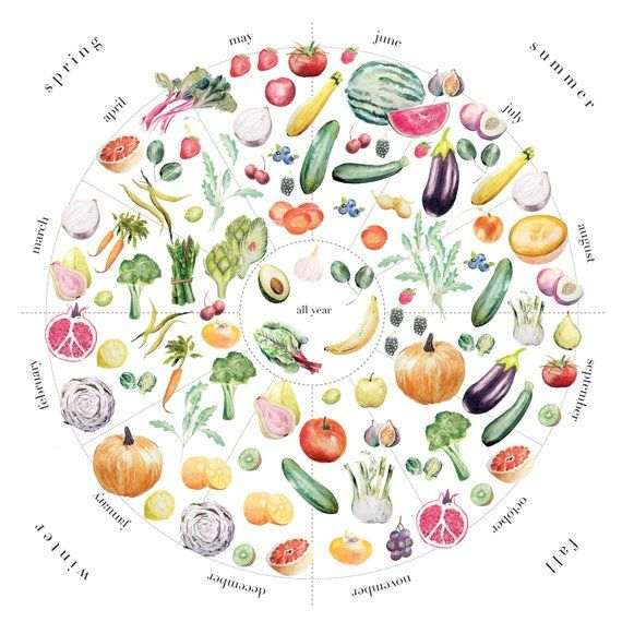 Perfect as home or kitchen decor, this infographic seasonal foods art print features a wheel of seasonal fresh fruits and vegetables. It can be difficult to remember which foods are best during each season, so we hope this print can make it a bit easier to shop for seasonal produce with this beautiful chart. The chart functions as a seasonal produce calendar; each quadrant represents a different season.Each fruit or vegetable is hand-painted then digitally arranged into the final design. Please