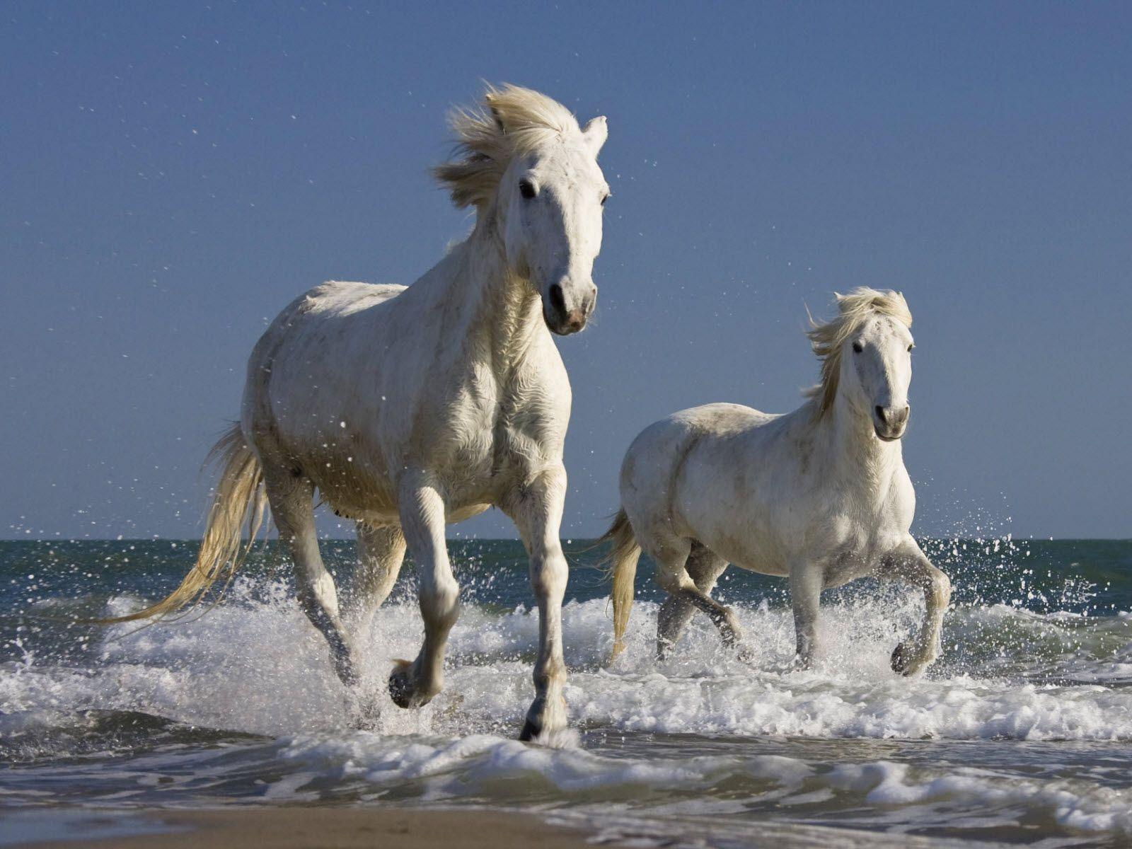 Simple Wallpaper Horse Beach - c9e002ac88e659633ebf2ecb8466ccdd  Image_64145.jpg
