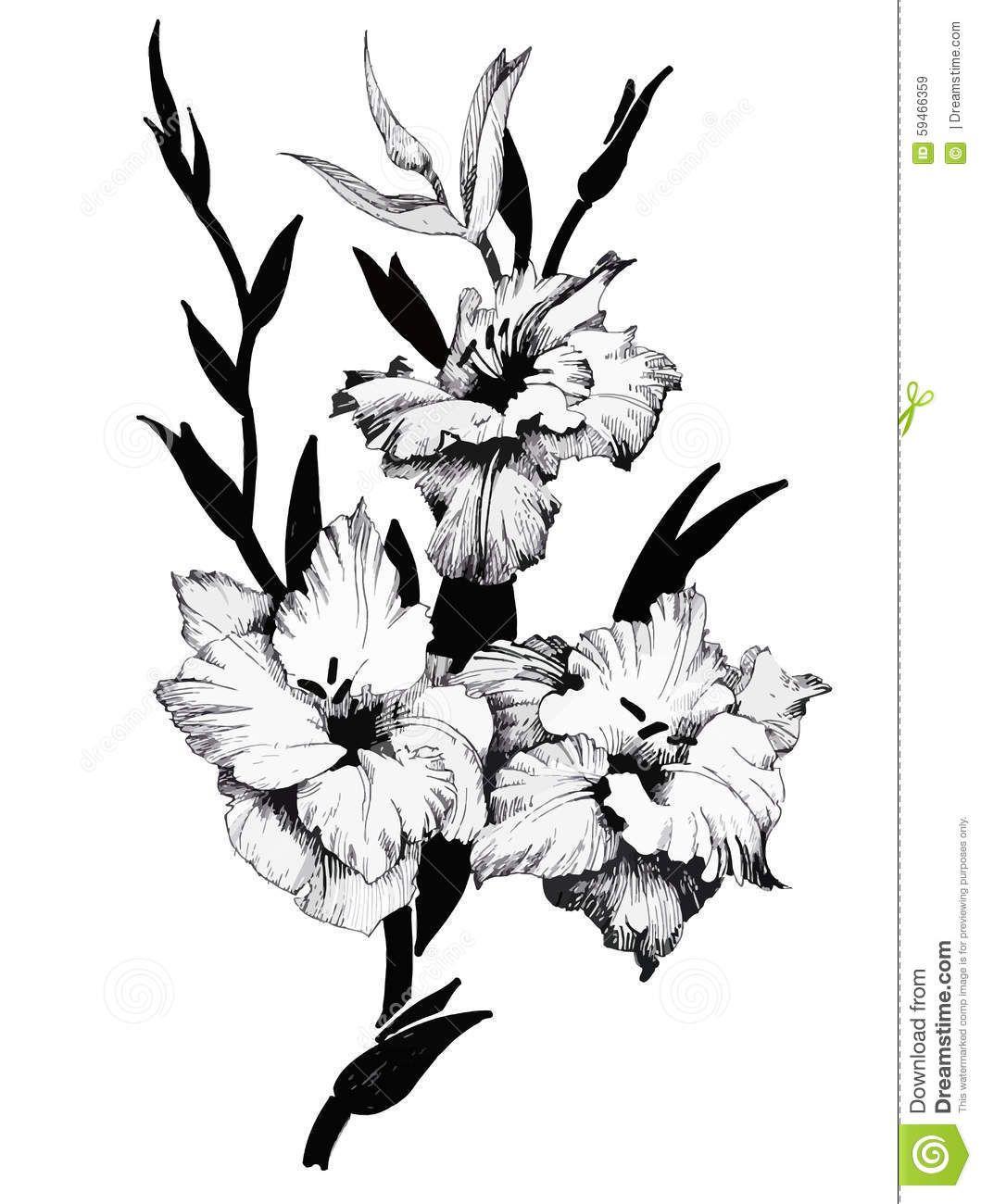Цветы картинки чб