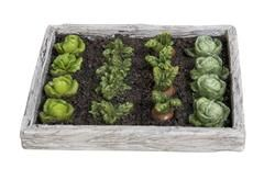 £6.00 Vivid Miniature World, Vegetable Garden -Great little vegetable garden, just make sure the rabbits don't eat it all! Fairy Garden Accessories UK.