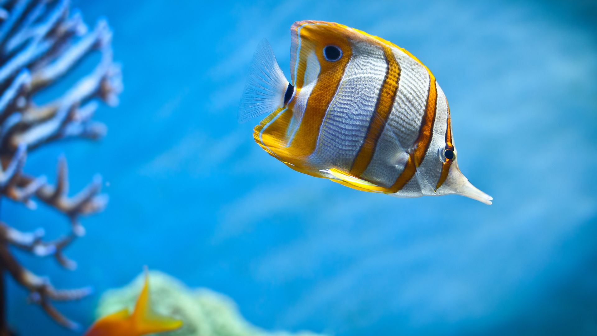 Fish Wallpaper Find best latest Fish Wallpaper for your PC desktop
