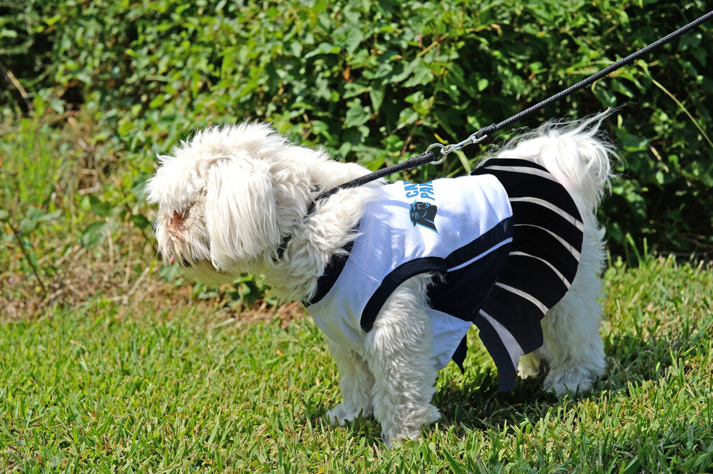 Carolina Panthers NFL Cheerleader Dress For Dogs Size Small    Find out  more about the 505b38a15