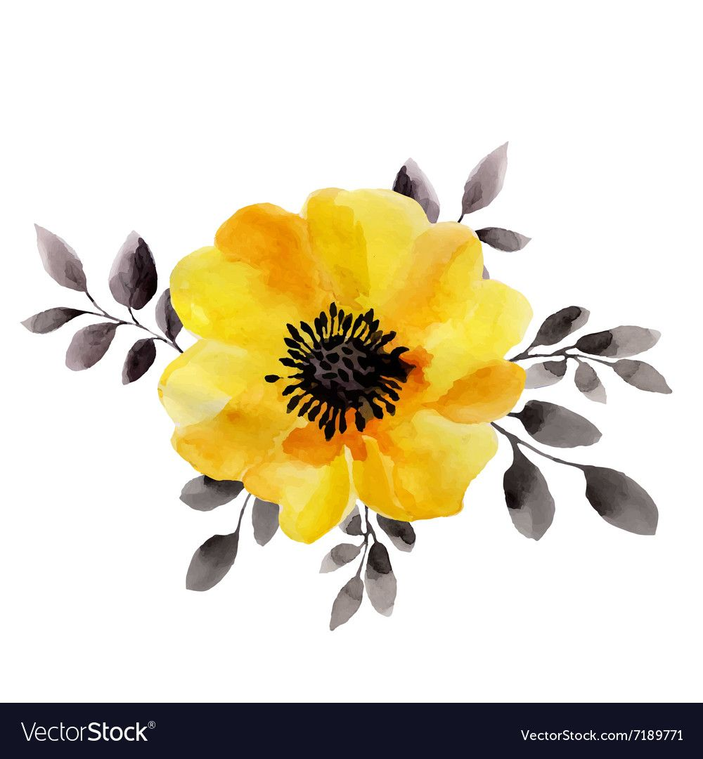 Watercolor Of Yellow Flower Isolated Vector Image On Watercolor