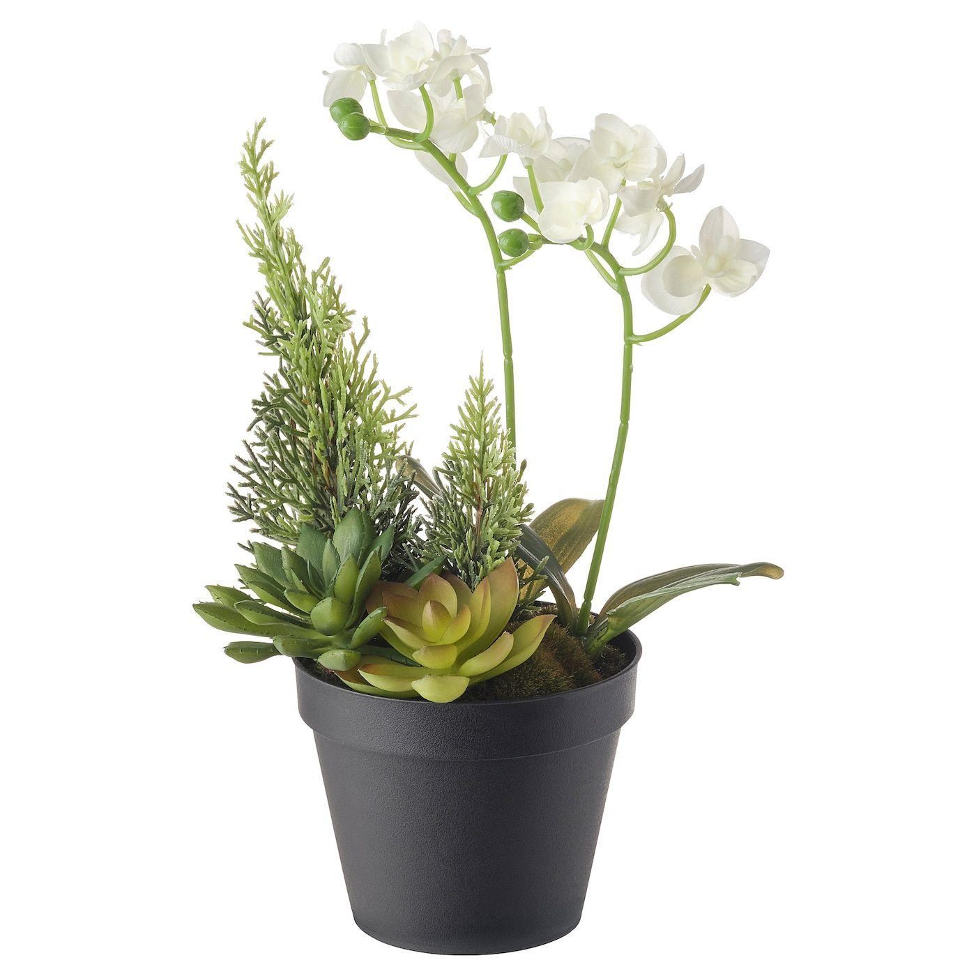 IKEA VINTERFEST Arrangement, Orchid White Artificial