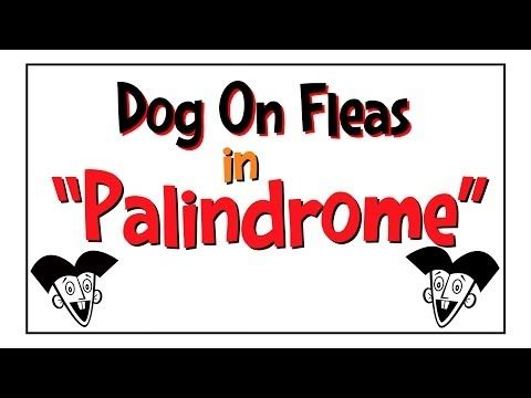 Dog On Fleas In Palindrome Youtube Teaching Palindromes