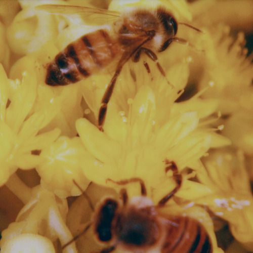 Yes Photograph by Neil Krug Yellow aesthetic, Bee