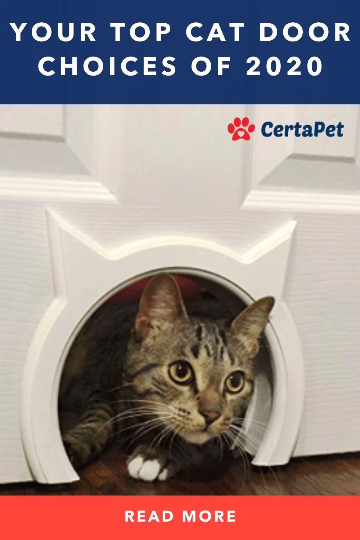 A Door For Mittens Your Top Cat Door Choices Of 2020 Pet Door