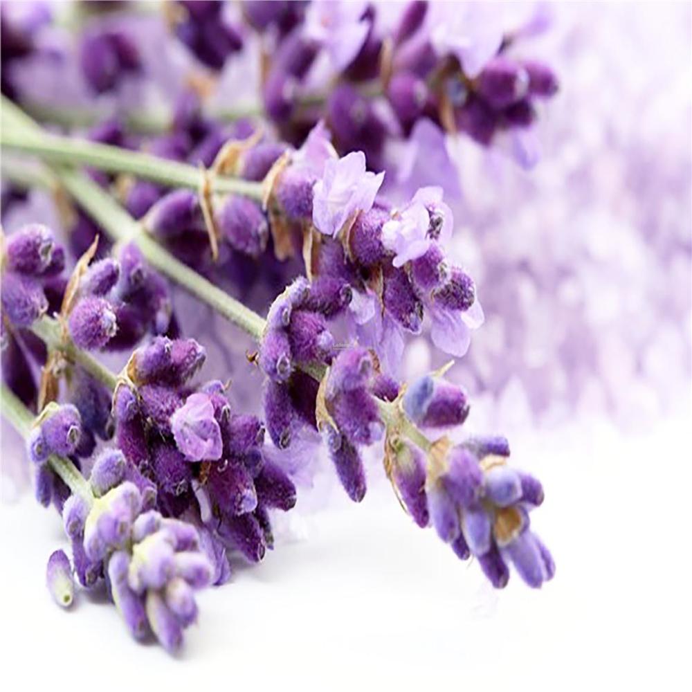 Lavender Flower 50gm End 6 7 2020 5 08 Pm Sushka Lavandy Lavanda Lavandovye Polya