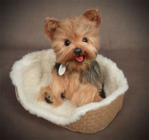 Pin By Julia Hart On Cute Dogs In 2020 Cute Baby Animals Cute Animals Yorkie