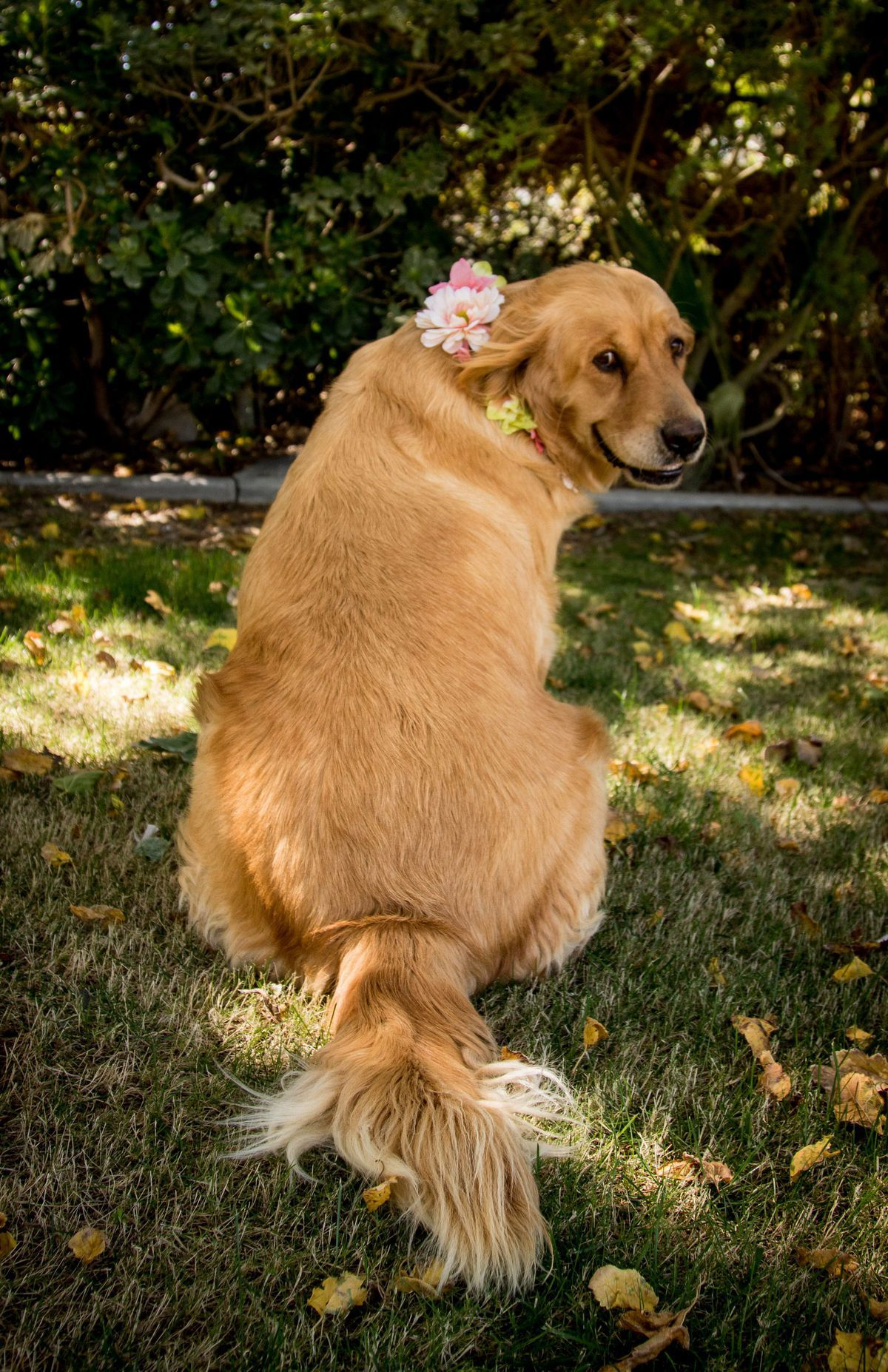 Pregnant Dog Gets The Maternity Photoshoot She Deserves Pregnant