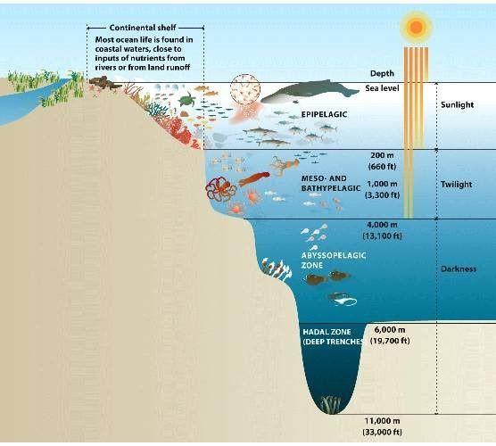 Ocean habitat worksheets for 2nd grade