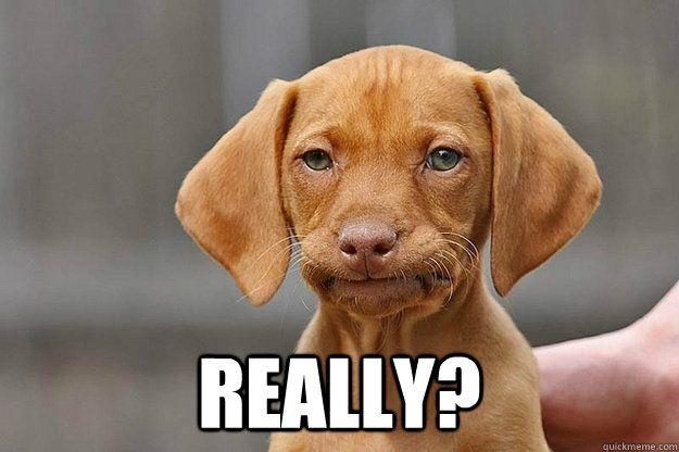 Funny Dog Meme Images : Mildly annoyed dog memes quickmeme funnys pinterest dog