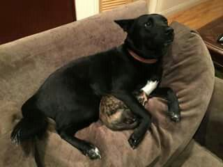 Dog + Kitten 2