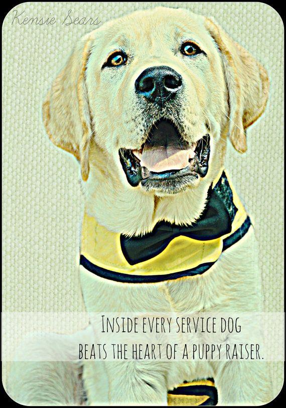 Yellow Labrador Retriever Puppy Service Dog Digital Art Print With