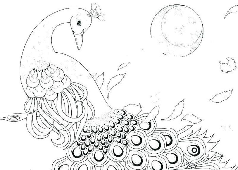 Peacock Coloring Pages Ideas Pdf Printable Free Coloring Sheets Peacock Coloring Pages Penguin Coloring Pages Animal Coloring Pages