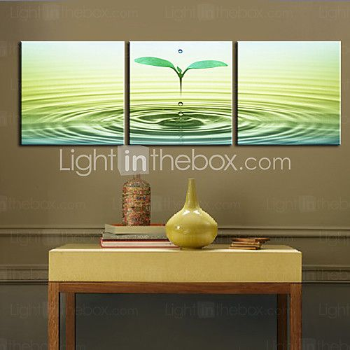 Stretched Canvas Print Art Botanical Sprout Set of 3 - USD $69.99