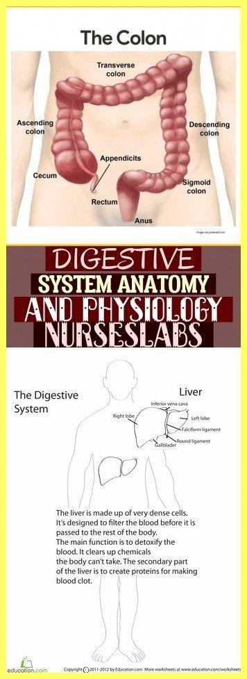 Digestive System Anatomy And Physiology Nurseslabs ...