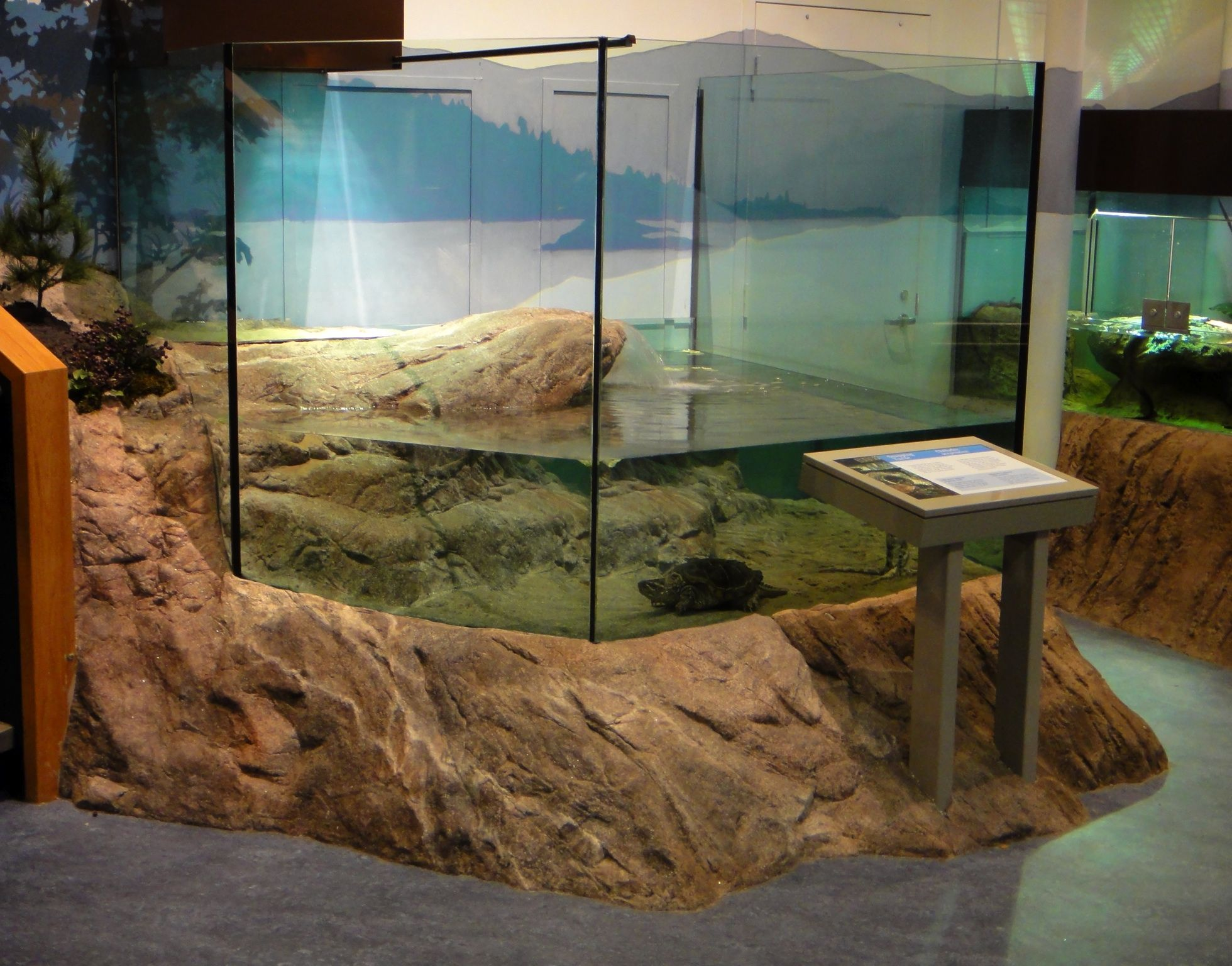 An Artificial Rock Skirt Around A Custom Glass Aquarium