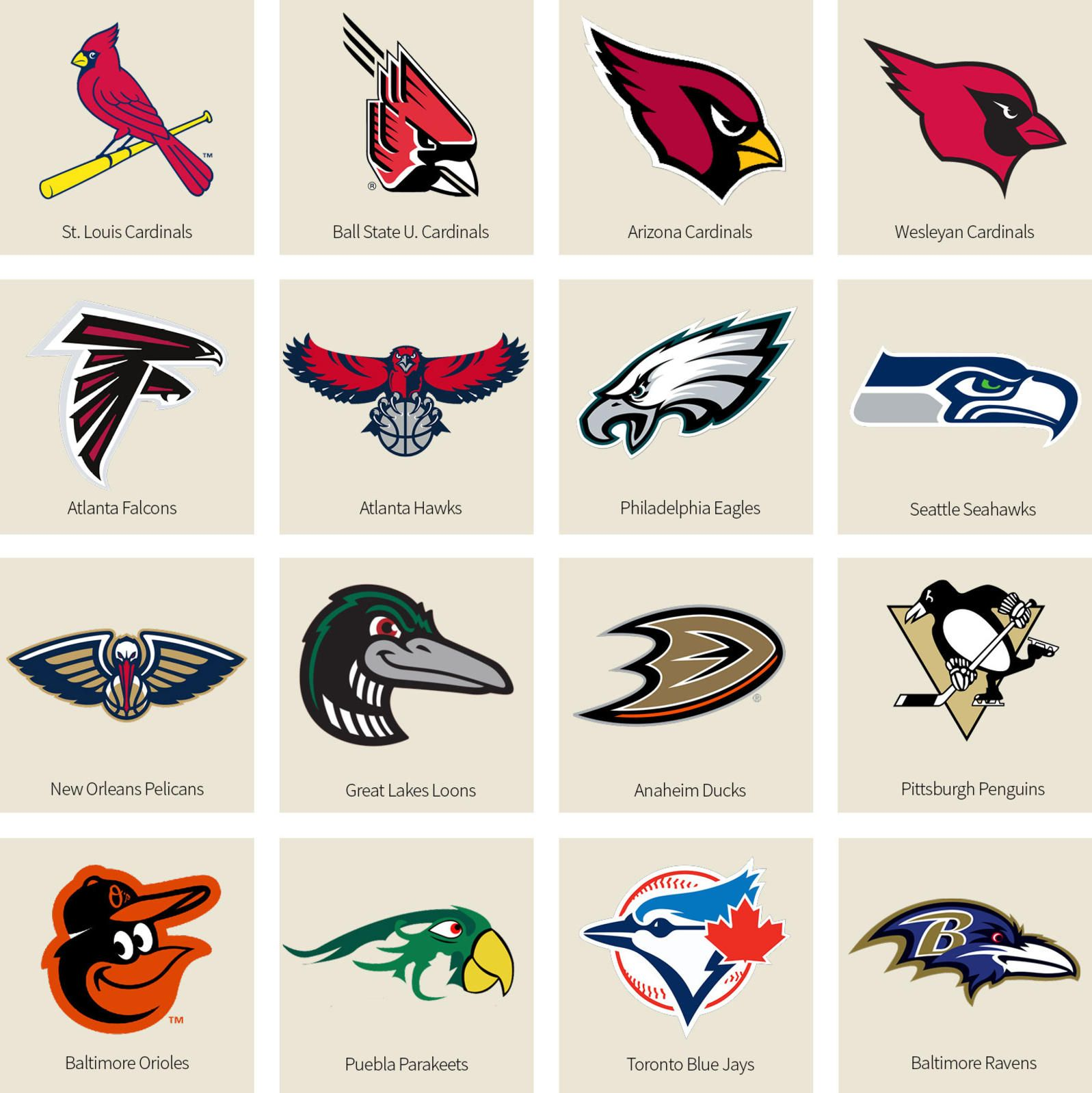 Bracket What's The Best BirdNamed Sports Team? We Have a