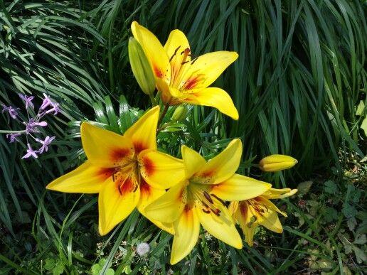 trío de flores