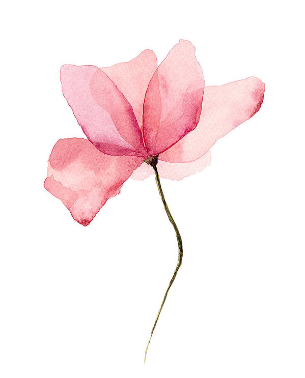 Pintura em Aquarela Impressão artística com o desenho Aquarela Flor Fundo Branco por Rustemgurler