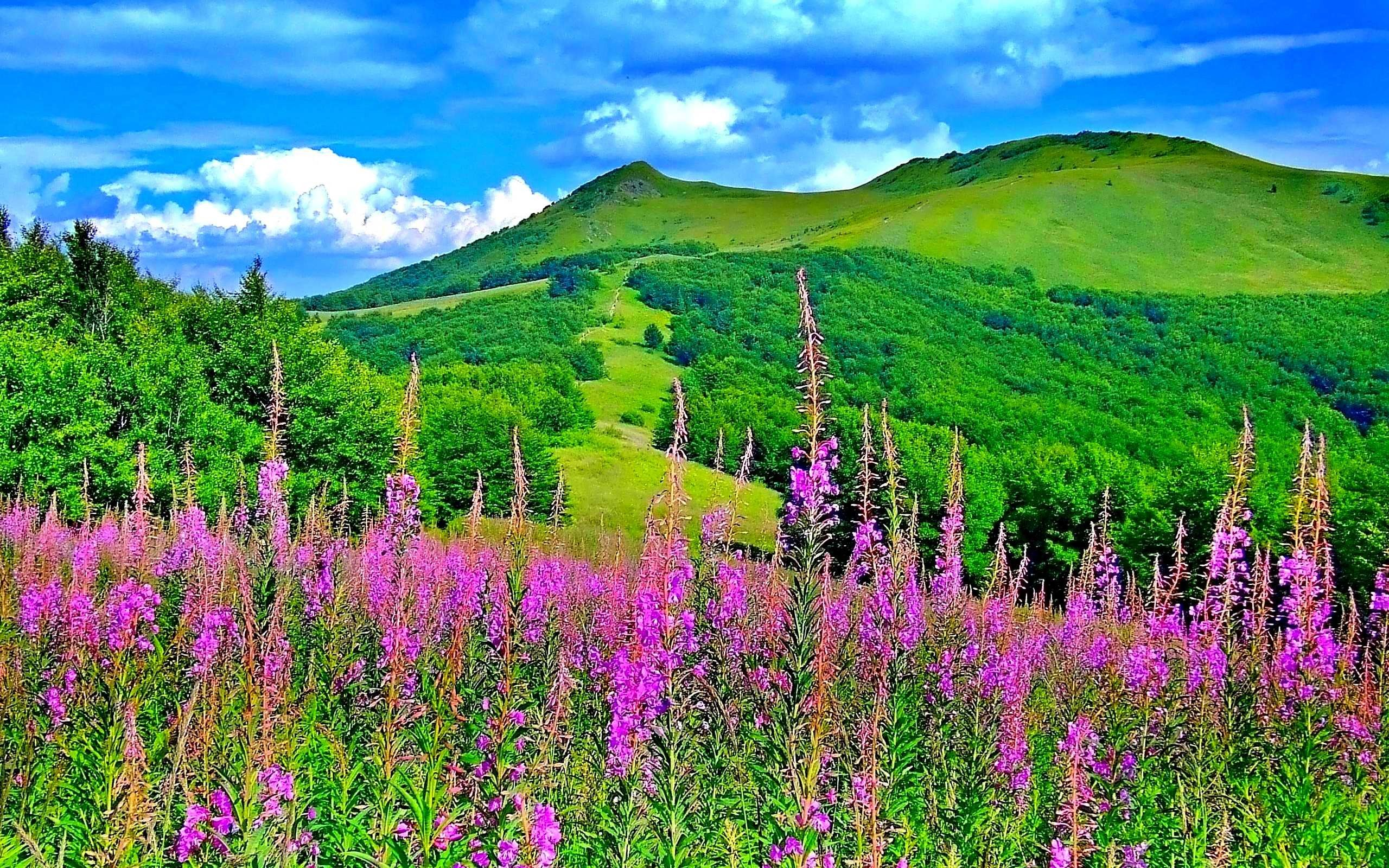 Beautiful Nature Spring Hd Desktop 10 HD Wallpapers ...