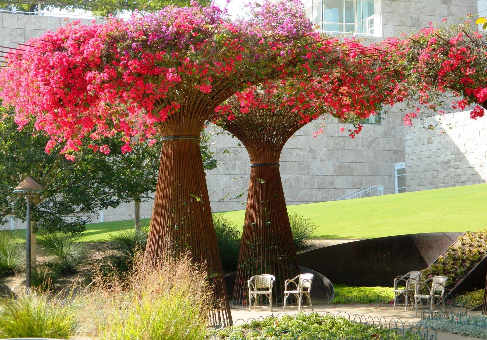 Bugambilia como arbol casas y estructuras pinterest ideas jardin arbustos y venezuela - Arboles ornamentales para jardin ...
