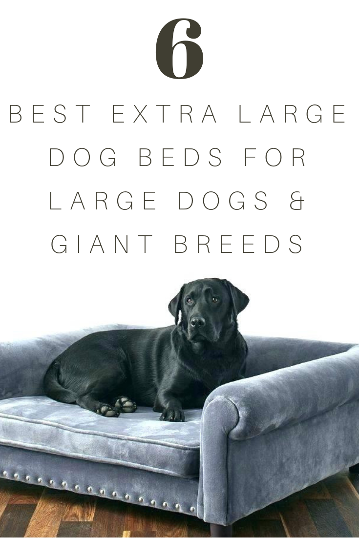 Best Extra Large Dog Beds For Large Dogs Giant Breeds Dog Bed Large Extra Large Dog Bed Giant Dog Beds