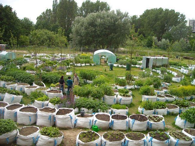 Bildergebnis für urban gardening balkon | Urban Gardening ...