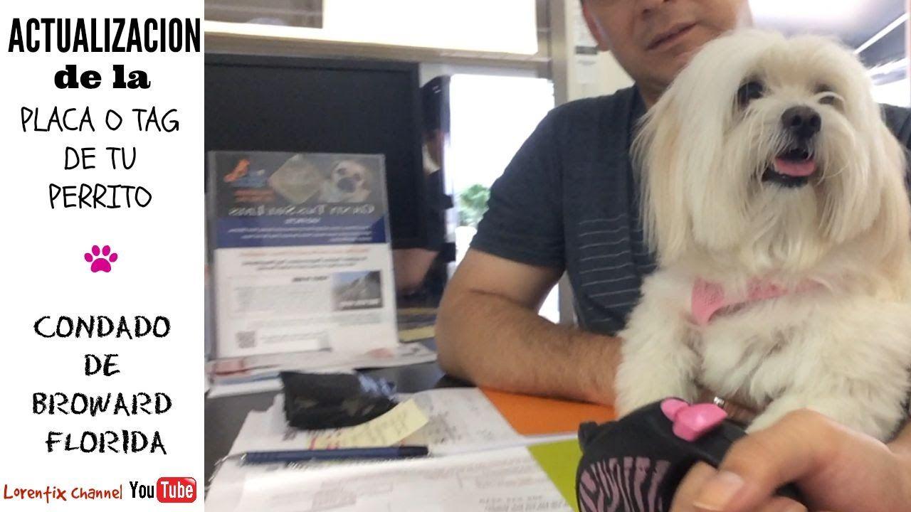 Inscripcion de tu perrito en la ciudad, Renovacion, Condado de Broward F...