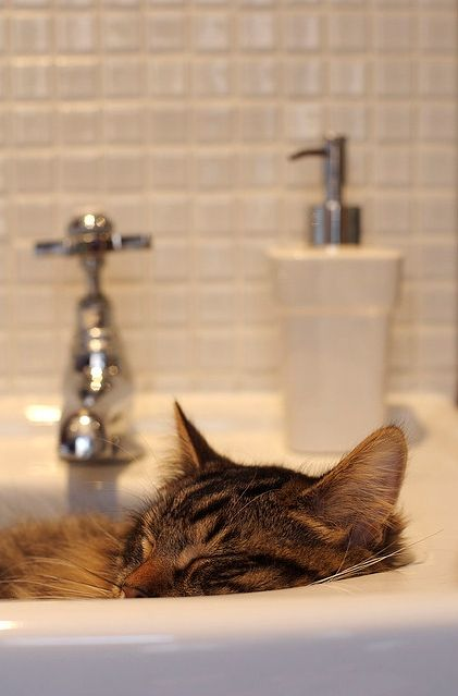 What Are You Doing In The Sink Sleeping Dogs Caturday Cute Cats