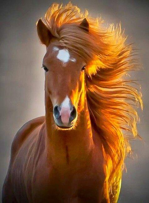 Libre como el viento!!!