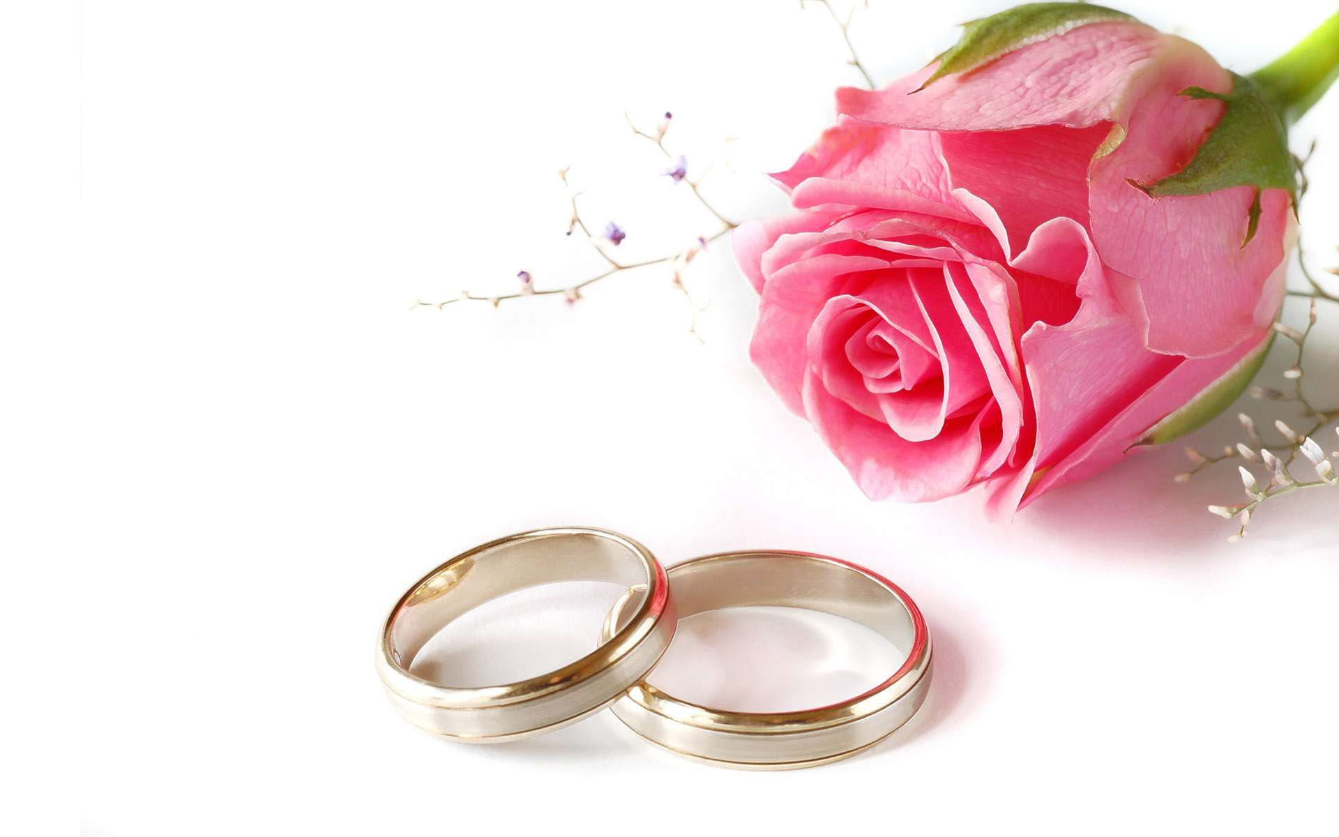 Wedding Pink Rose And Rings Power Point Backgrounds