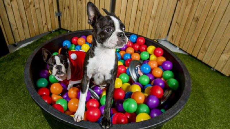 Christmas Party Ideas Gold Coast Part - 44: Vet Clinic Holds Christmas Party For Pets With Colourful Ball Pit On Gold  Coast.