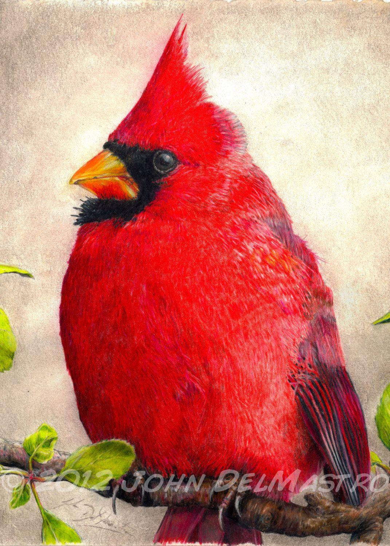 Color art colored pencils - Fine Art Colored Pencil Drawings Aceo Atc Size Print Color Pencil Drawing Cardinal
