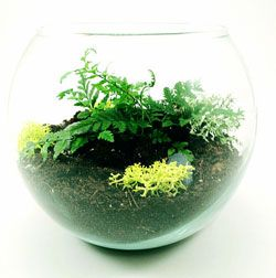 Care And Cleaning Of Plant Terrariums Terrarium Pinterest