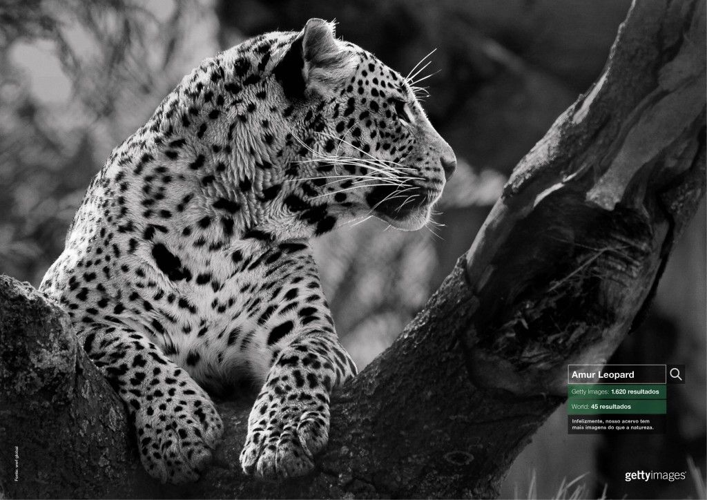 Leopardo Bronze Outdoor Cannes 2015 Clube De Criacao
