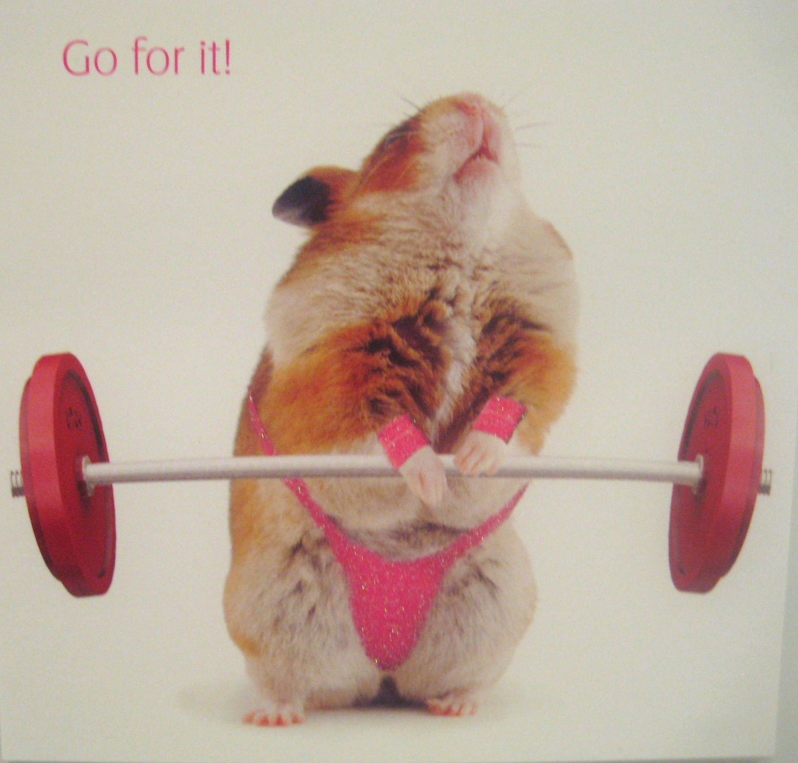 Funny Hamster Blank Greetings Card Weight Lifter Go For It