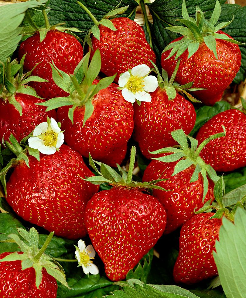 Mmmm Langtar Efter Sommaren Jordgubbar Blommor Frukt