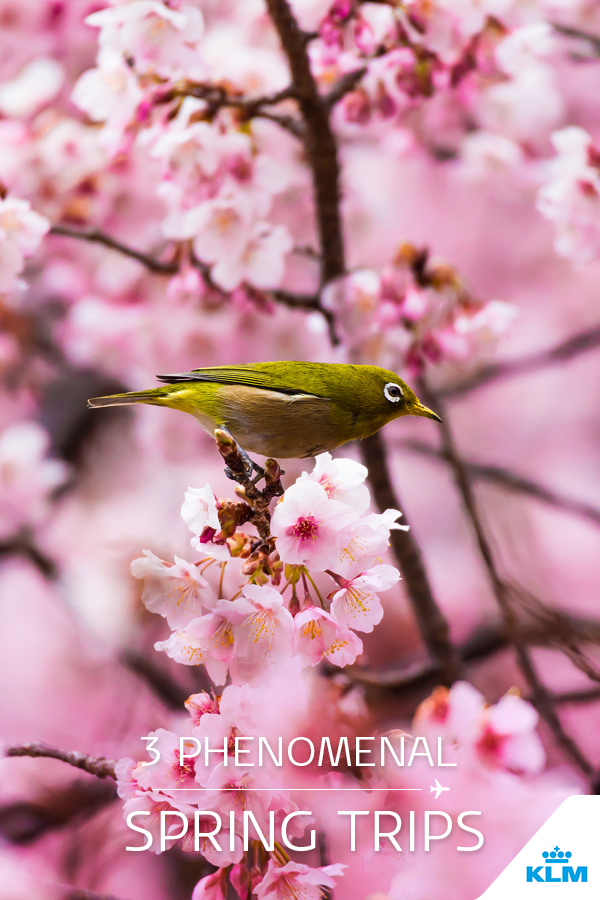 From The Magnificent Cherry Blossom Trees In Japan To The Budding Greenery Of New York S Central Park When Spring Spring Trip Trip Spring Travel Destinations