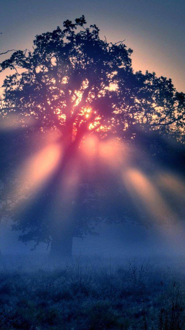 Foggy Sunrise Nature iPhone 5s Wallpaper Say good