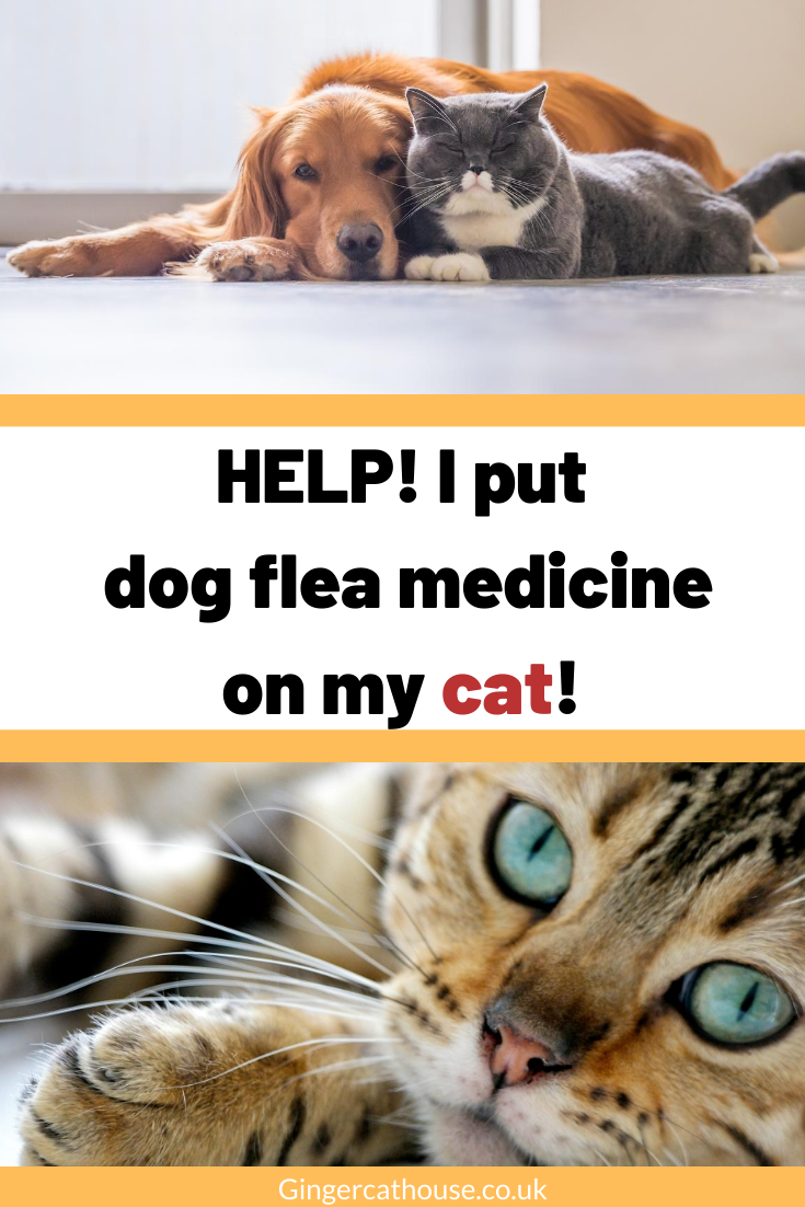 Help I Accidentally Put Dog Flea Medicine On My Cat In 2020 Cat Care Cats Fleas