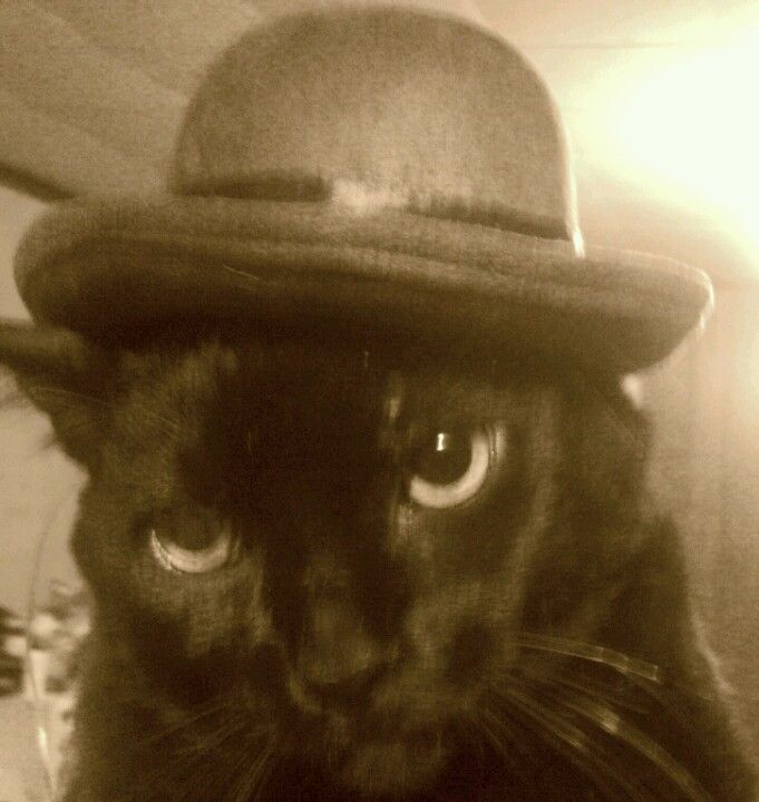 My cat Santos in a bowler hat!!!