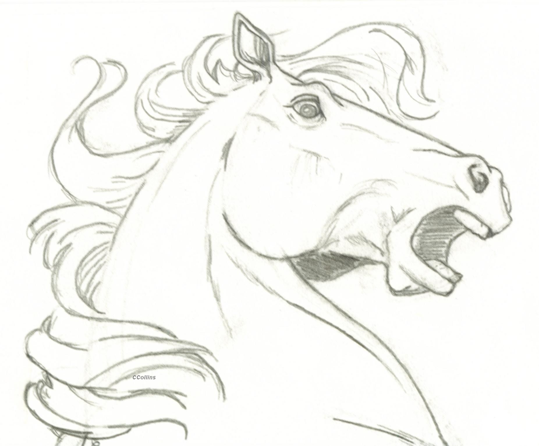 Horse Drawings  Horse Head Surprise By Ccangel33 Traditional Art Drawings  Animals 2005