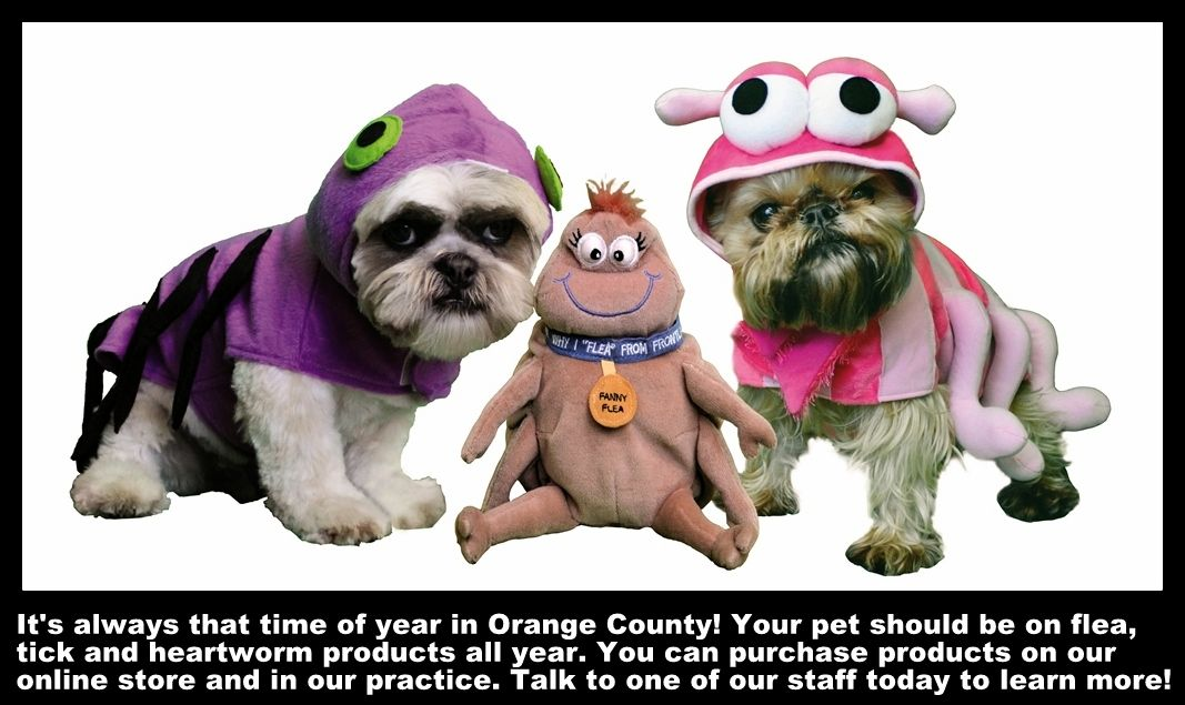 Fleas Make Pets Itchy Keep Your Pet Flea Tick And Parasite Free All Year Long Itchy Pet Your Pet Animal Hospital