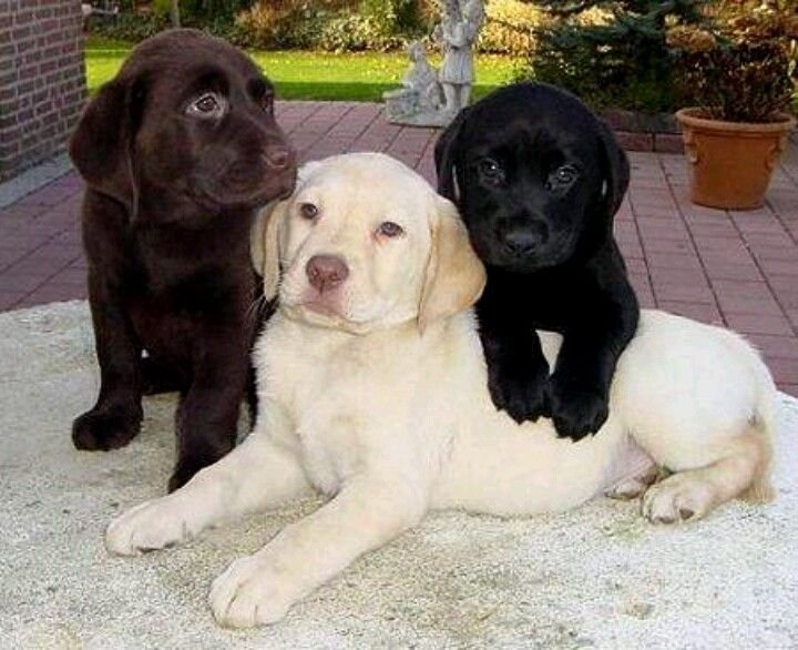 Pin By Linnie On Animals Baby Dogs Puppies Cute Dogs